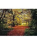 Autumn Forest 4-068 wallpaper wall mural