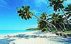 Palm Paradise PR1819 palm tree wall mural