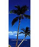 Palm Tree 2-1028 Tropical Wallpaper Mural
