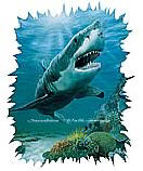 Shark 252-72002 Kid's Wall Murals