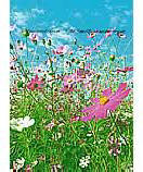 Flower Meadow Wallpaper wall murals