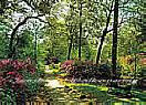 Wooded Path 3947 Wall Murals