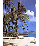discount tropical wall murals