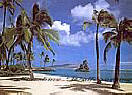 Hawaii (#2) 8-038 palm tree Murals