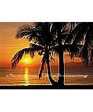 Palm Beach Sunrise discount wall murals