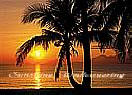 Palm Beach Sunrise Large Ocean Wall Murals