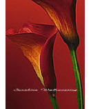 Red Calla Lilies 406 Wallpaper wall murals