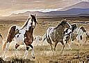 Desert Horses york wallpaper wall mural