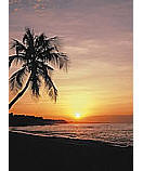 Tropical Sunset Wallpaper palm tree wall mural